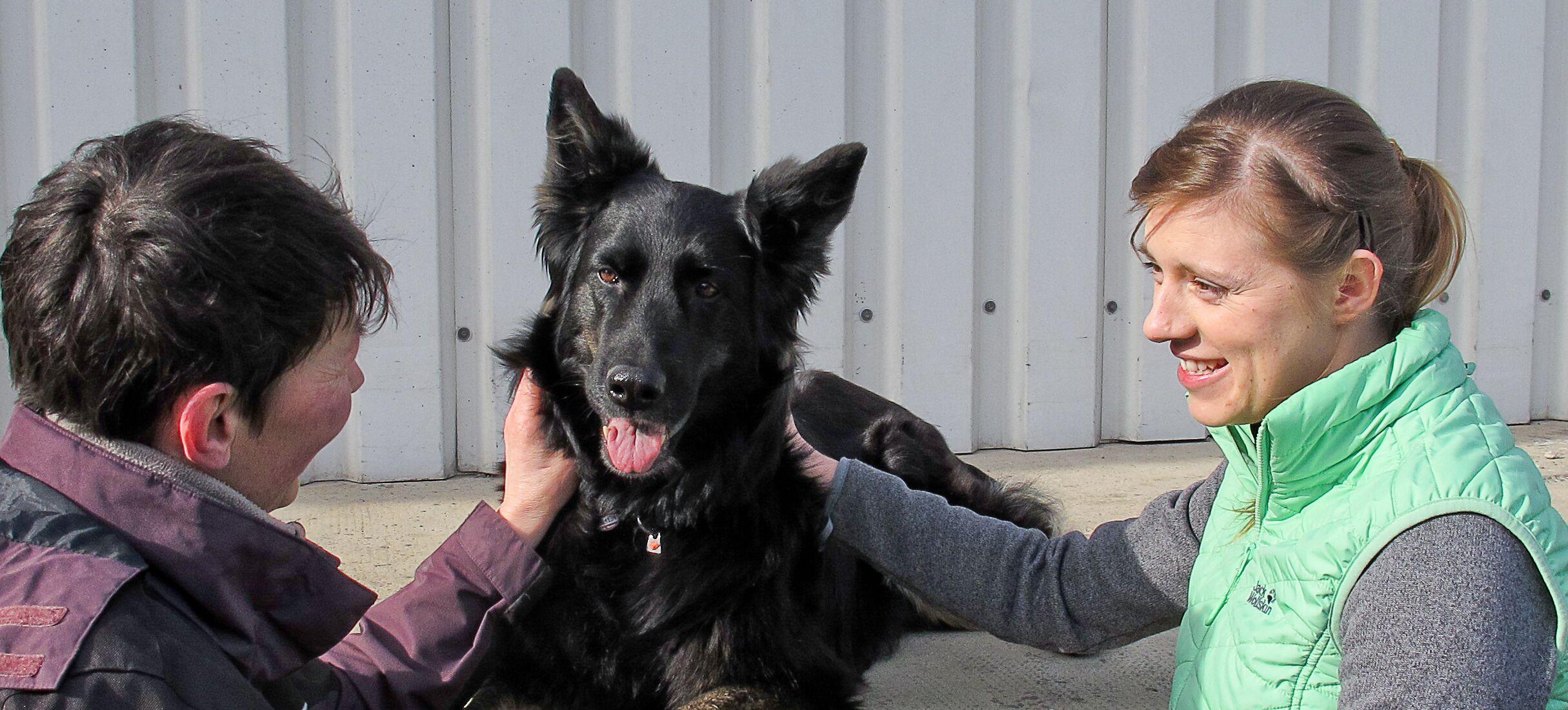 Hundephysiotherapie Torgau Delitzsch Oschatz